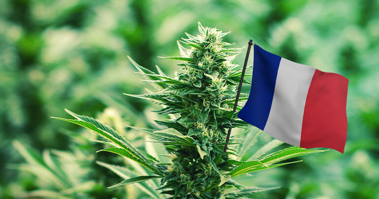Във Франция вървят смело напред с проучванията