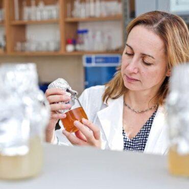 Екстрактът от канабис може да предпази медоносните пчели от пестициди