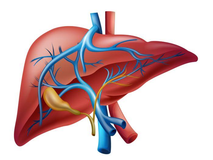 CBD и ползи за черния дроб